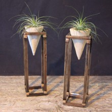 Cone Plant Stand with Stricta Air Plant