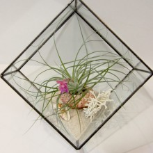 Terrarium Large Beach kit
