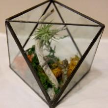 Triangular Terrarium Small Forrest Kit