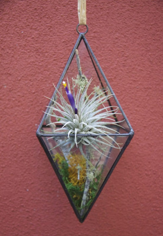 Hanging Geometric Terrarium Small With Kit Options Living Art Store